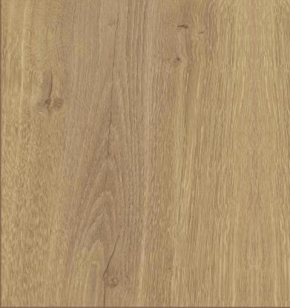 Lucerne Oak